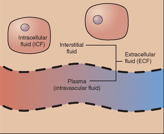 Intracellular Fluid